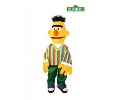 BERT 65cm